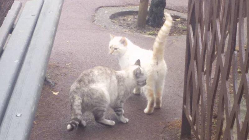 Recherche solution pour famille de chats siamoisés à la rue (Biarritz) 12651210