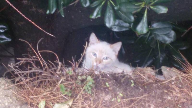 Recherche solution pour famille de chats siamoisés à la rue (Biarritz) 12662410