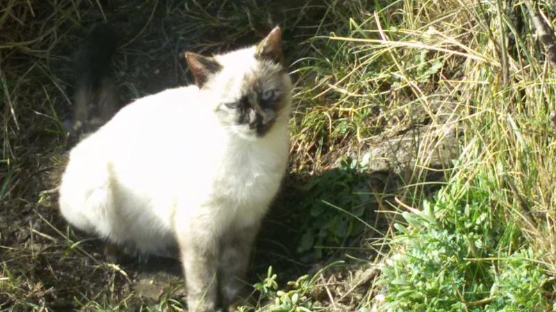 Recherche solution pour famille de chats siamoisés à la rue (Biarritz) 20160210