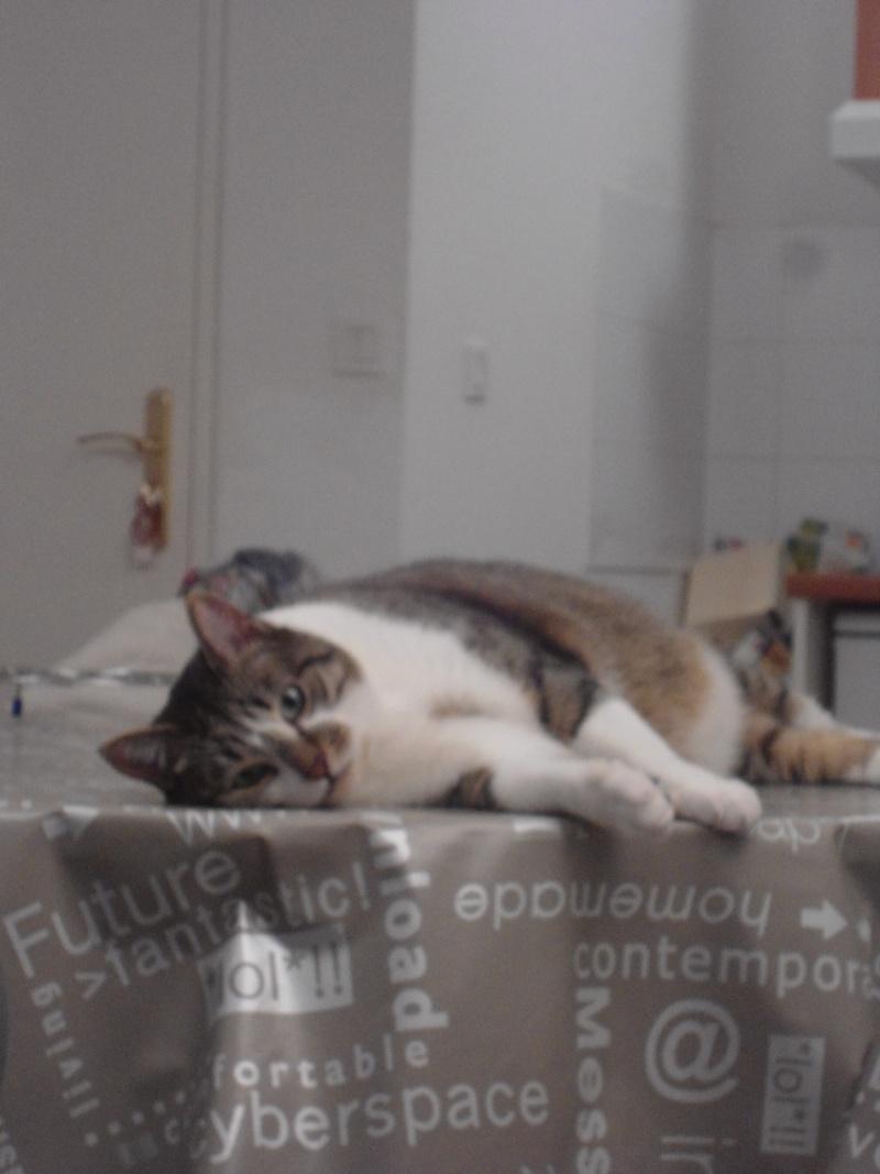 Tristam, jeune et gentil chat à Limoges Dsc01710