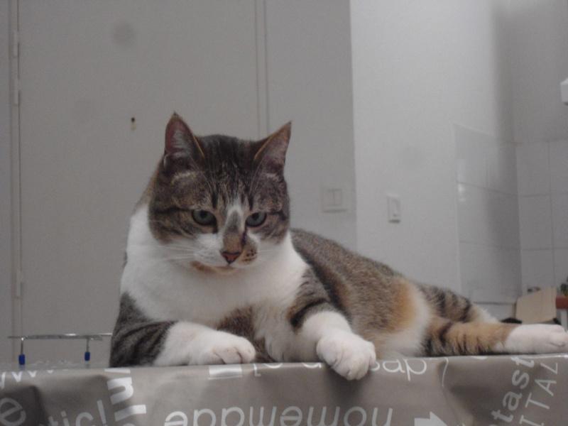 Tristam, jeune et gentil chat à Limoges Dsc01713