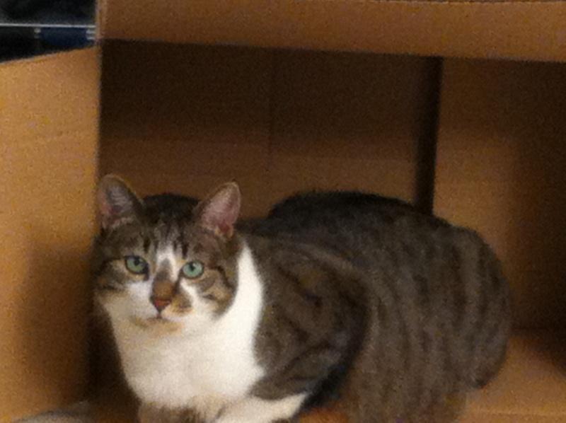 Tristam, jeune et gentil chat à Limoges - Page 2 Img_0510