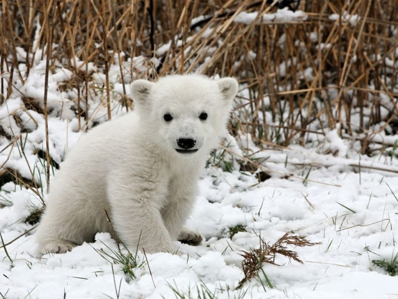 L'OURS BLANC 0byby_10