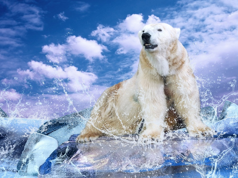 L'OURS BLANC Oursb_10