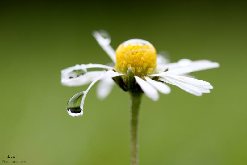 J'ai rendez-vous ... Avec une fleur ! 0113