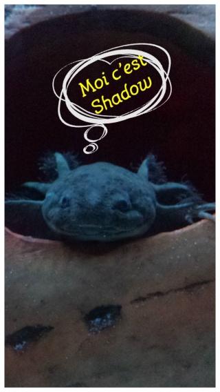 Règlement du Forum (suite) - Page 31 Shadow13