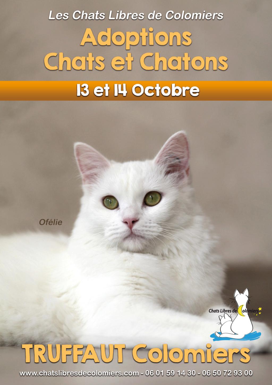 Week-end adoptions 13 et 14 Octobre à Truffaut Colomiers   2018-115
