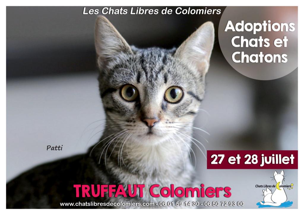 Week-end adoptions 27 et 28 juillet à Truffaut Colomiers 2019-012