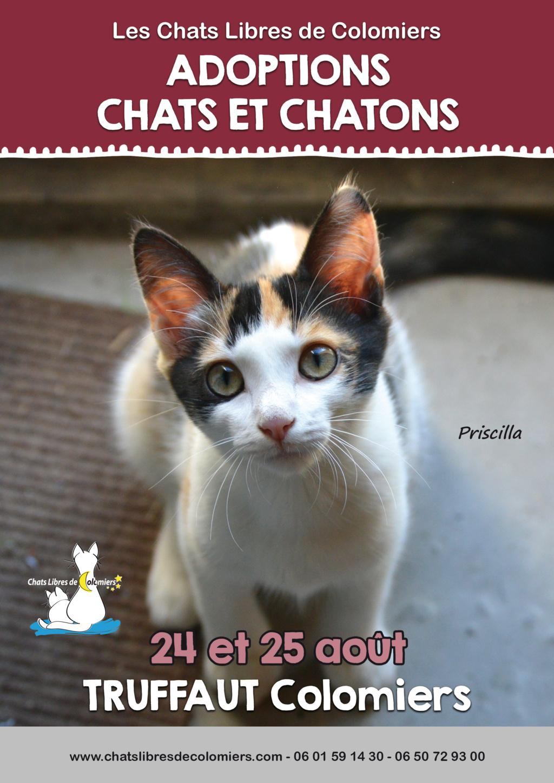 Week-end adoptions 24 et 25 août à Truffaut Colomiers 2019-014