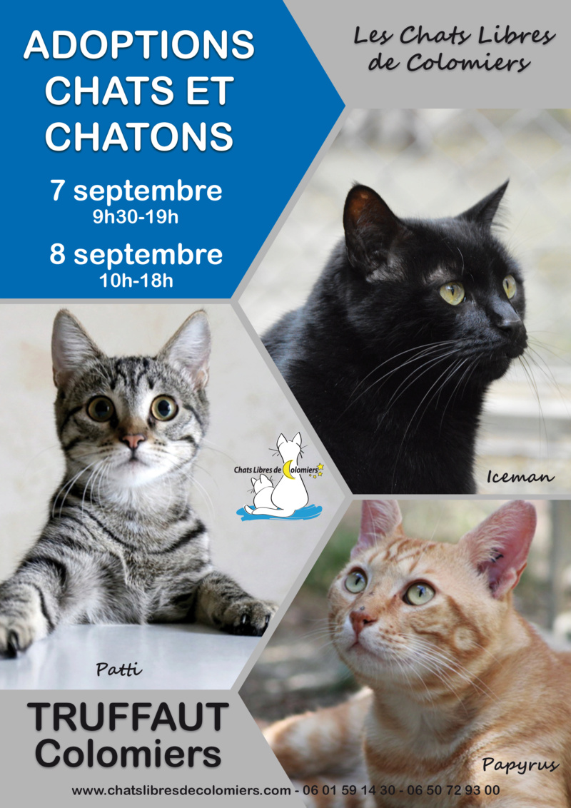 Week-end adoptions 7 et 8 septembre à Truffaut Colomiers  2019-018
