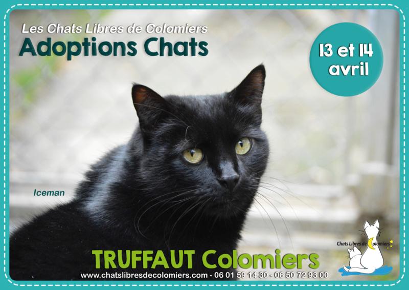 Week-end adoptions les 13 et 14 avril à Truffaut Colomiers  2019-022