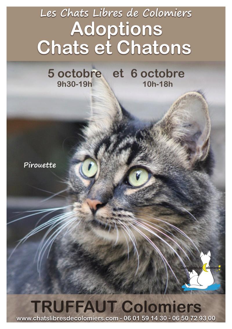 Week-end adoptions 5 et 6 octobre à Truffaut Colomiers 2019-110