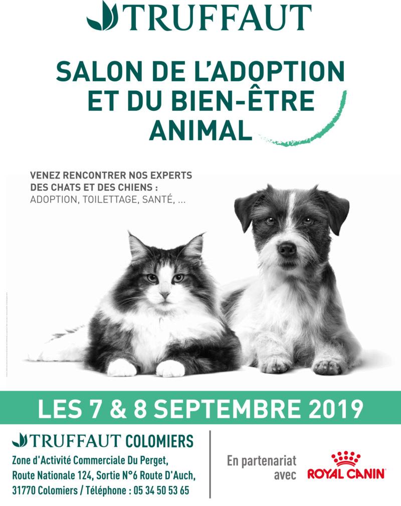 Week-end adoptions 7 et 8 septembre à Truffaut Colomiers  60x80_10