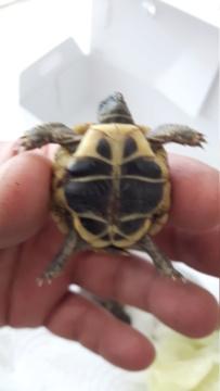 Identification de mes tortues 20180915