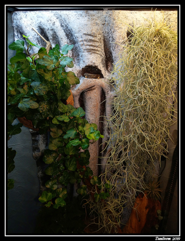 Création premier Terra (Lygodactylus williamsi) 00310