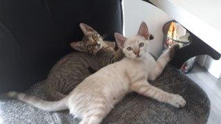 Fotos de nuestras mascotas! - Página 2 4726bd10