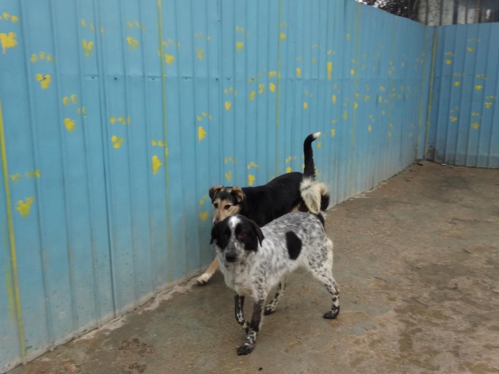 TAMINA, F-X, taille moyenne, née 2015 (PIATRA/pension) un peu timide 52859310