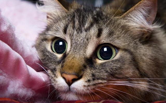 Кошки в вашем доме - Страница 15 Ae7f3410