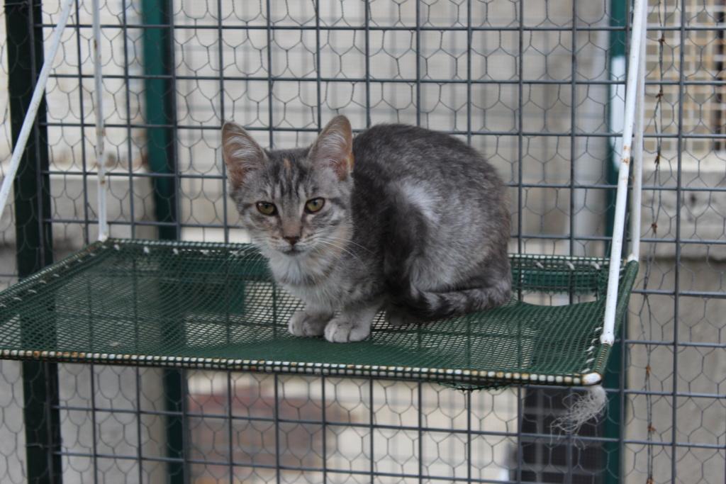 GABRIELA (chaton femelle tigrée) Gabrie11