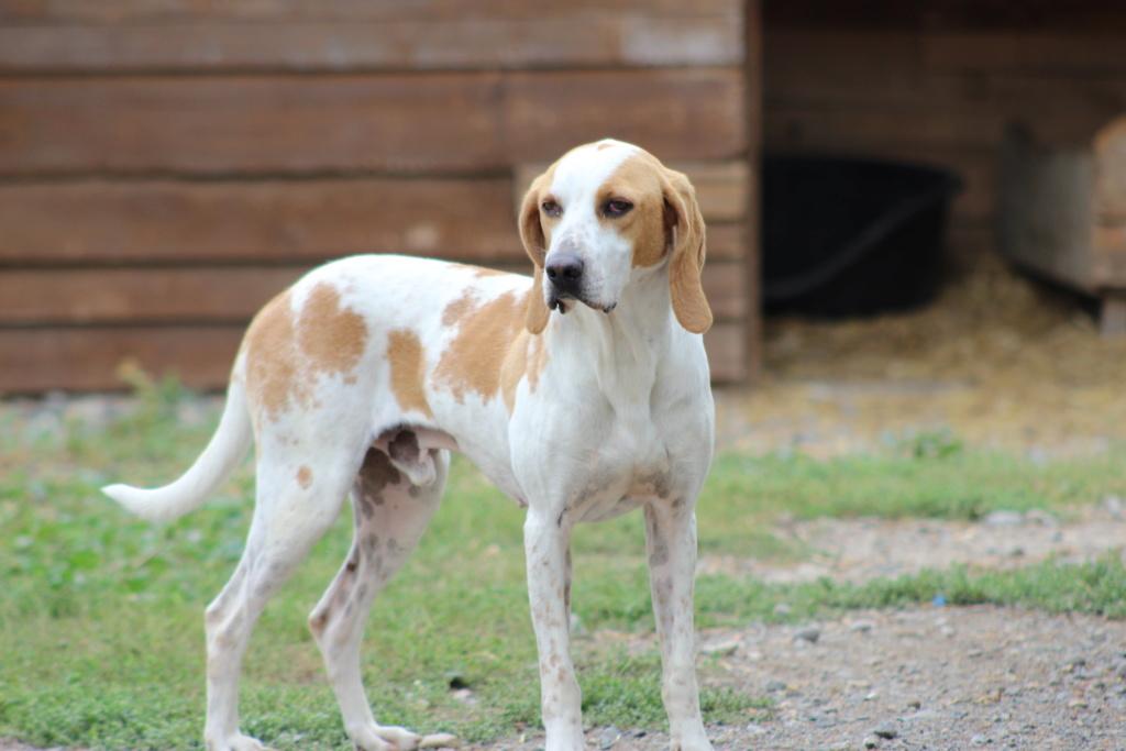ABU (chien mâle croisé courant) Réservé  Img_1012