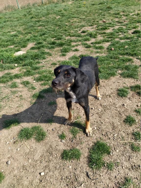 FALCO (chien croisé border) Img_2046