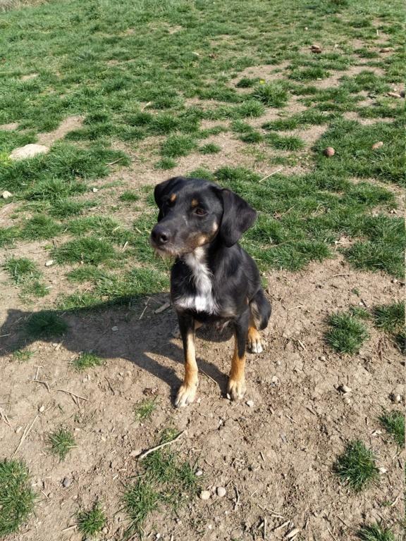 FALCO (chien croisé border) Img_2047