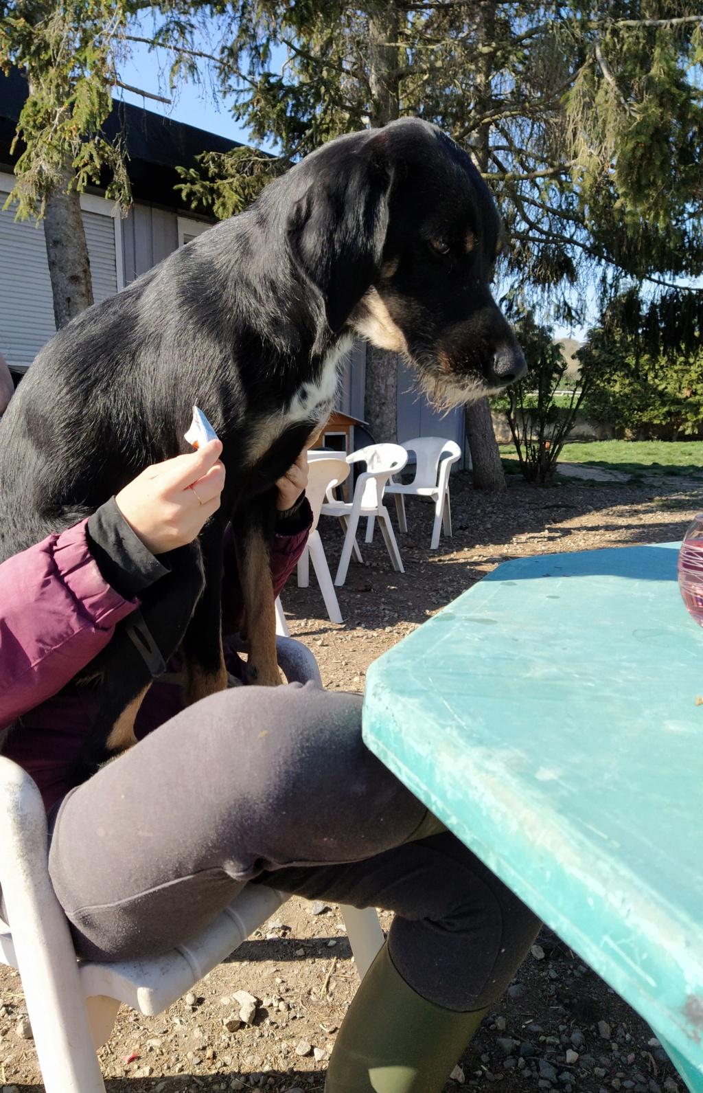 FALCO (chien croisé border) Img_2069