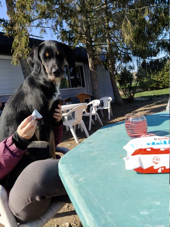 FALCO (chien croisé border) Img_2070