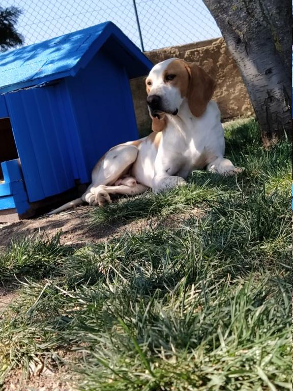 ABU (chien mâle croisé courant) Réservé  Img_2081