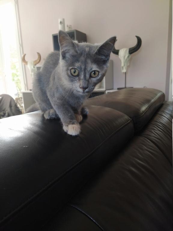 Tara (chaton femelle isabelle) Img_2093