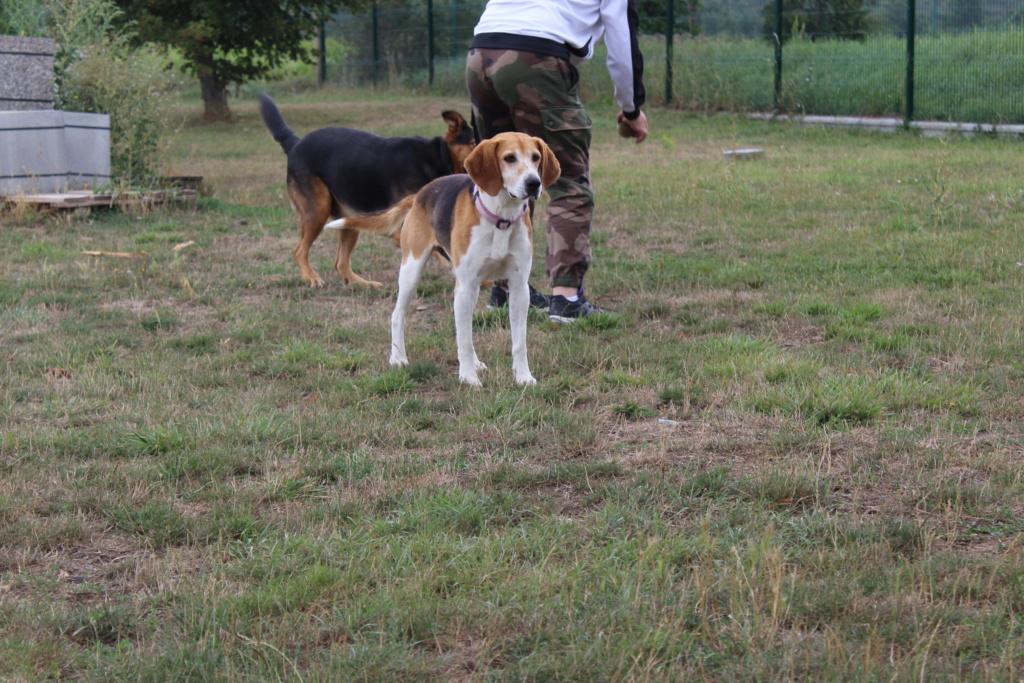 IODA (mâle croisé beagle) Ioda_110