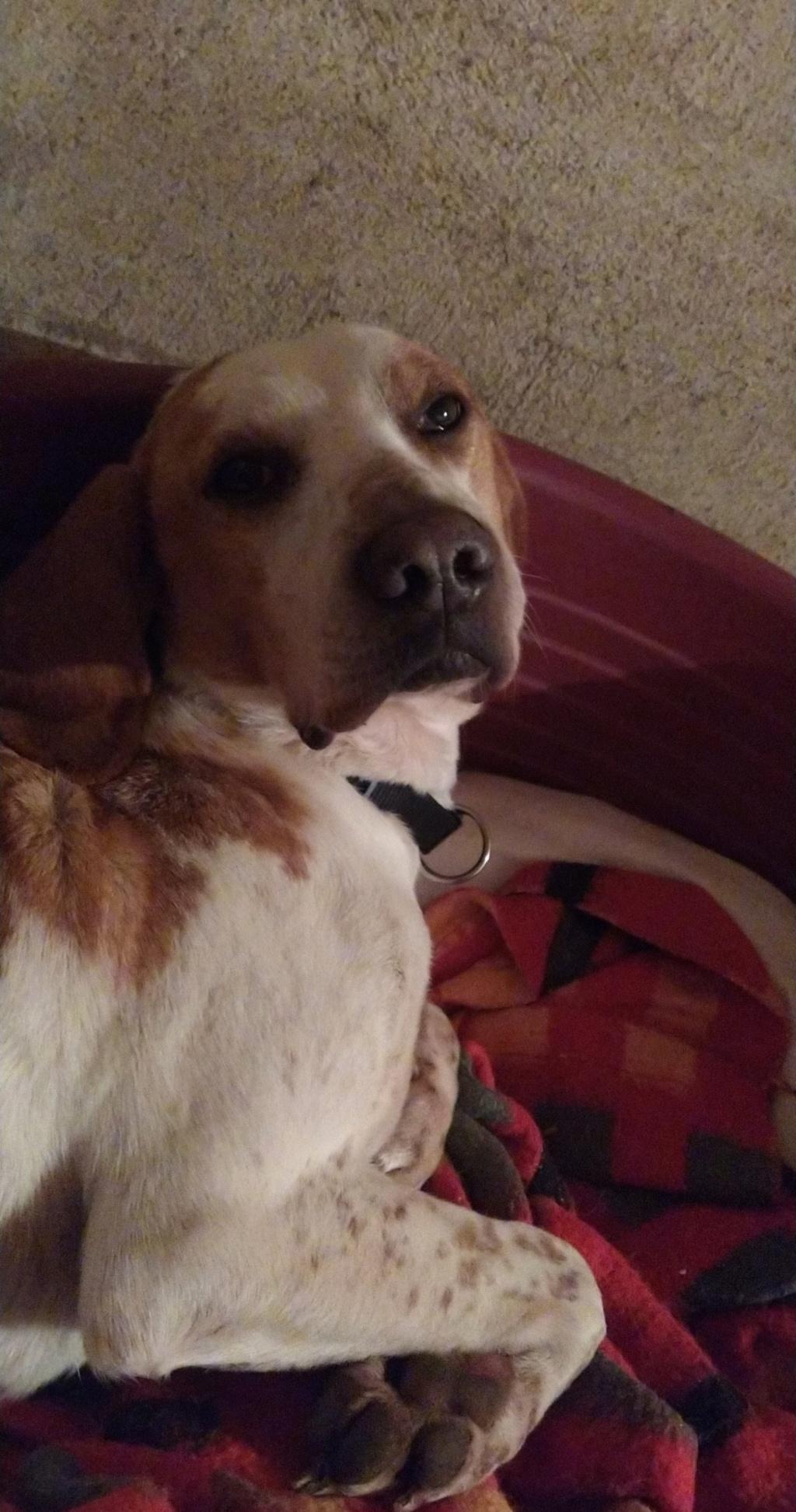 ABU (chien mâle croisé courant) Réservé  - Page 2 Snapch17