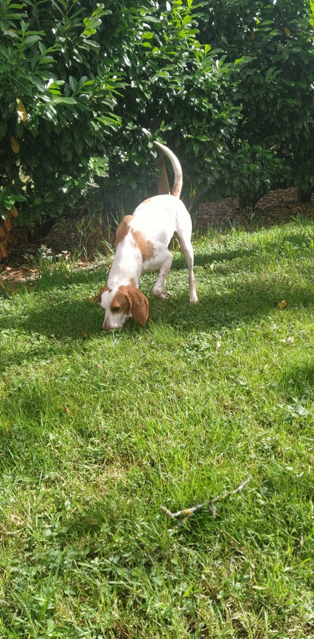 ABU (chien mâle croisé courant) Réservé  - Page 2 Snapch22