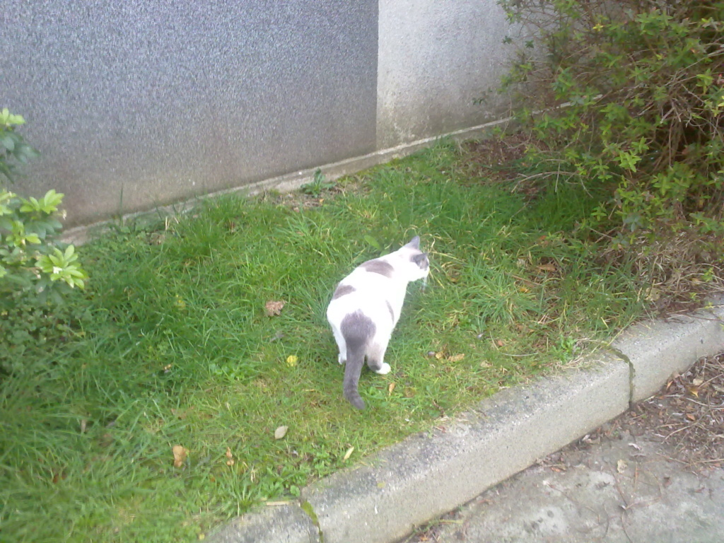 JUDE, chatte européenne seal point , née en août 2014 - Page 2 16022014