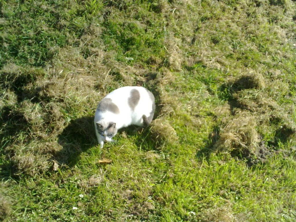 JUDE, chatte européenne seal point , née en août 2014 - Page 2 28032014
