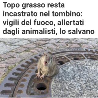 L'Amore per gli ANIMALI - Pagina 8 20190265