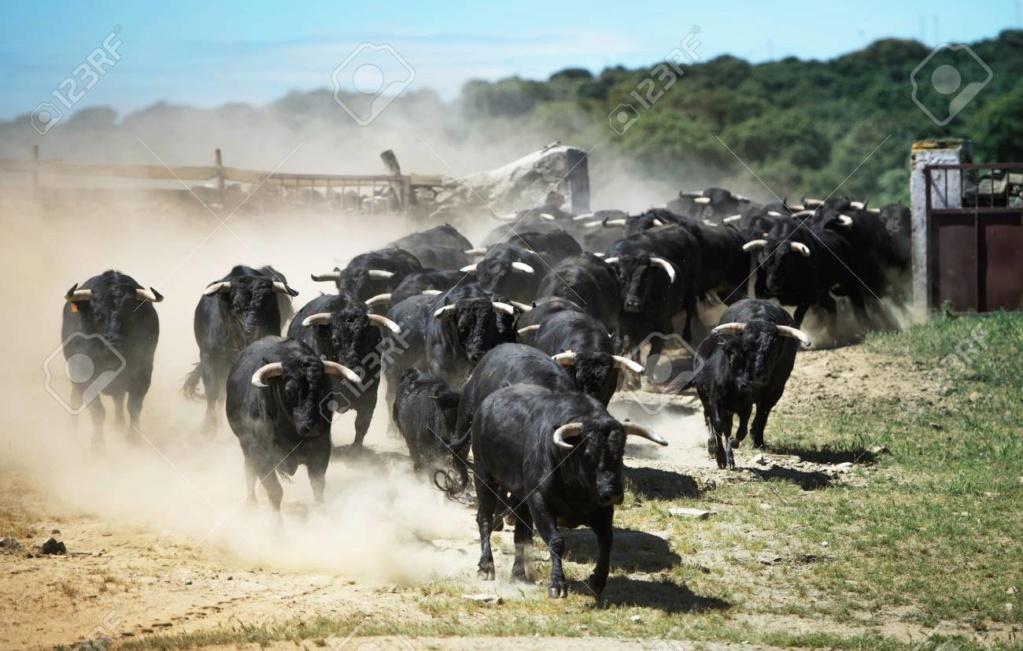 Bulls march in March 72850811