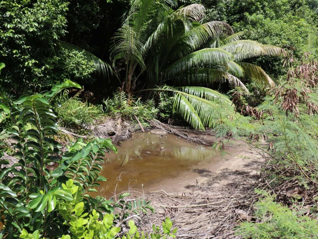 Quelle est cette plante des Seychelles? Capter11