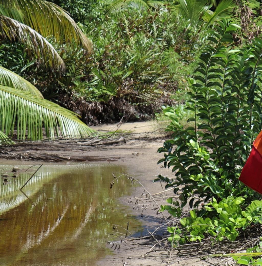 Quelle est cette plante des Seychelles? Nouv-t10