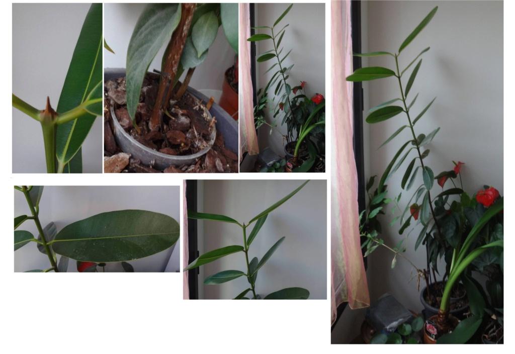 Quelle est cette plante des Seychelles? Tout110