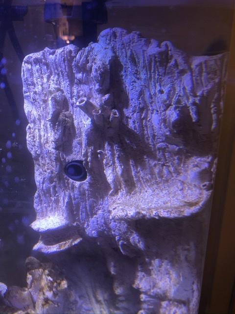 Micro récif en céramique «maison» d'Ogo  6c90d810