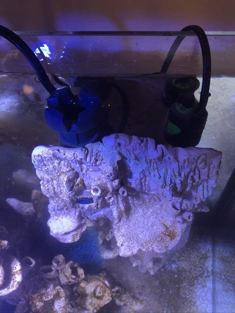 Micro récif en céramique «maison» d'Ogo  Dc14b910