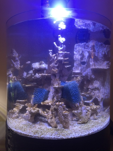 Micro récif en céramique «maison» d'Ogo  F7ea2910