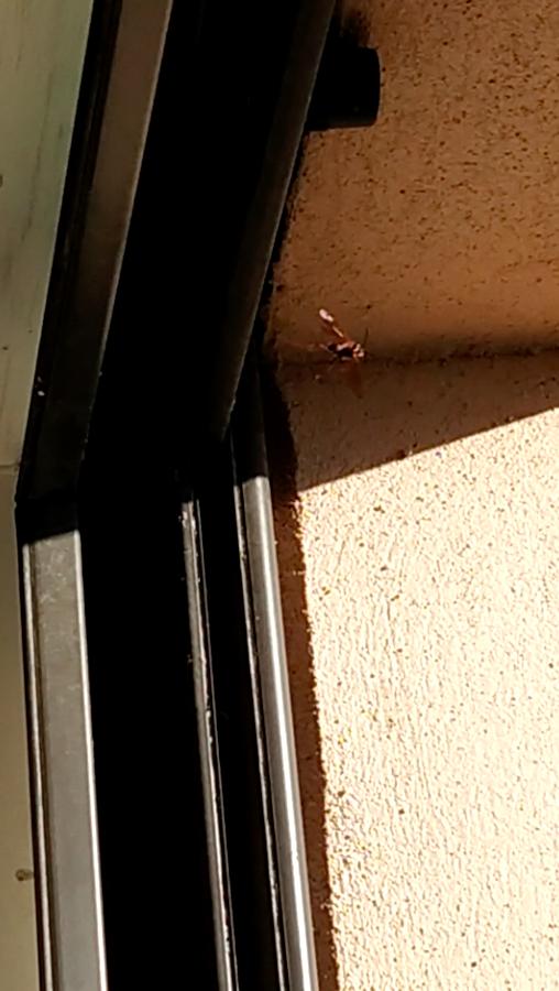 Guêpes à ma fenêtre, dois-je m'inquiéter? Captur11