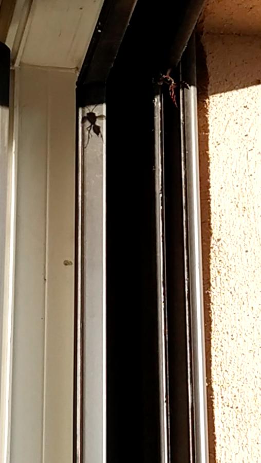 Guêpes à ma fenêtre, dois-je m'inquiéter? Captur12