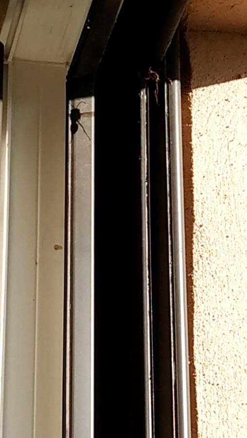 Guêpes à ma fenêtre, dois-je m'inquiéter? Captur13