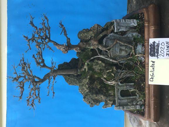 Root over rock Triden13