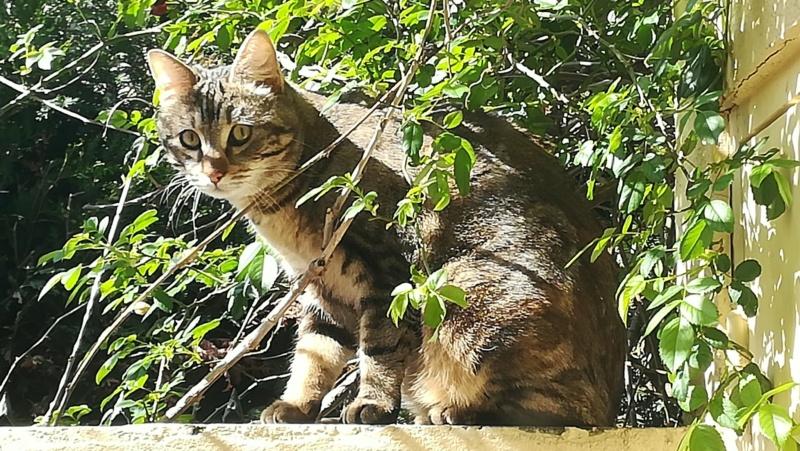 Des écrivain·e·s et des chats (avec des photos) Chat_210