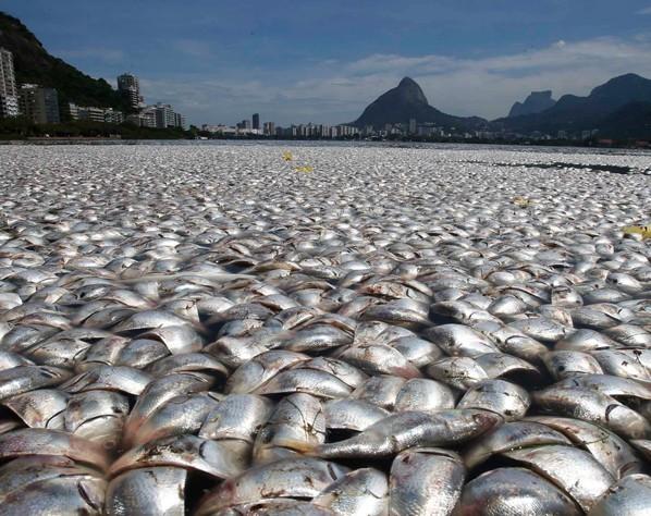 60 tonnes de poissons F1116c10