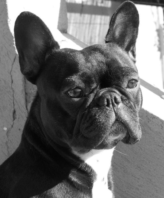 mes photos noir et blanc  Fgfd_b10